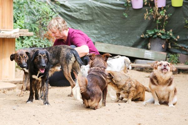 Raya-Karin-Hunde